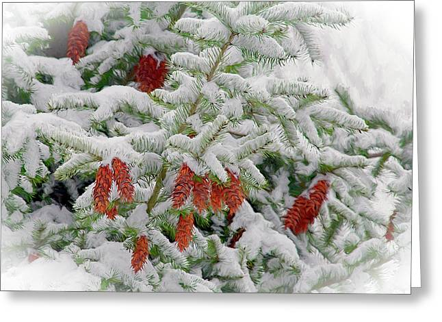 Fir Cones On White Photo Art Greeting Card by Sharon Talson