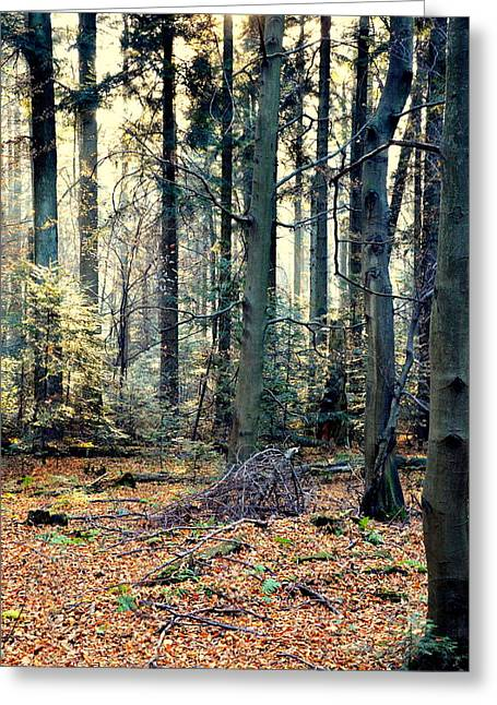 Fir Forest-2 Greeting Card by Henryk Gorecki