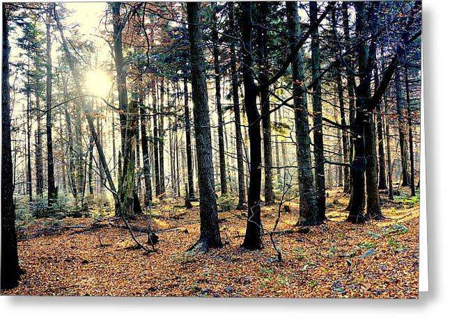 Fir Forest-3 Greeting Card by Henryk Gorecki