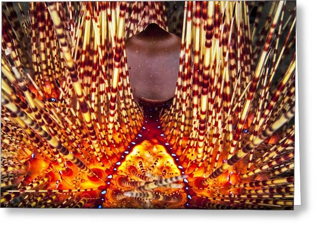Fire Beneath The Waves Greeting Card