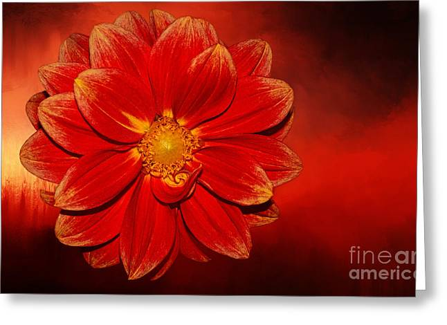 Fire Dahlia By Kaye Menner Greeting Card by Kaye Menner