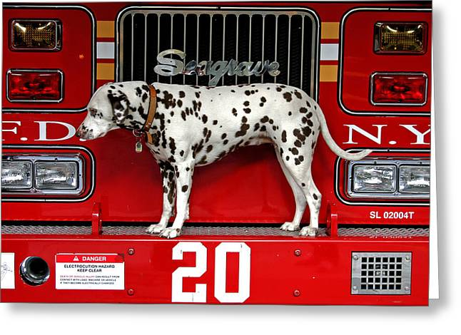 Fire Dog Greeting Card by Bryan Hochman
