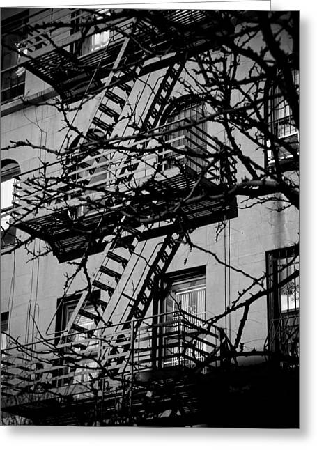 Fire Escape Tree Greeting Card by Darren Martin