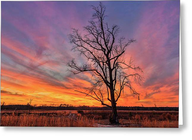 Fire In The Sky Greeting Card by Chris Austin