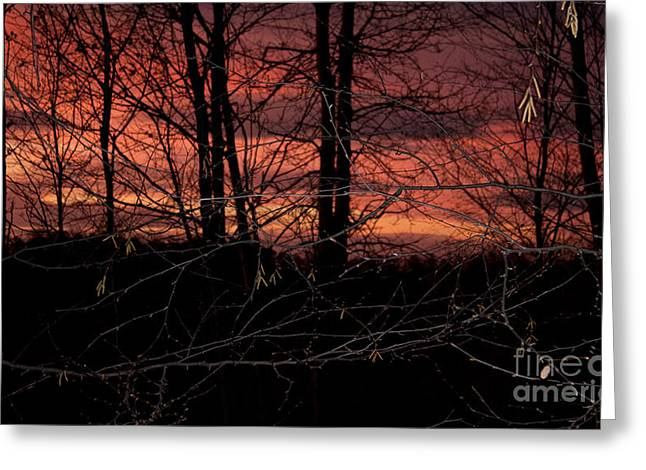 Fire In The Sky Greeting Card by Robert Sander