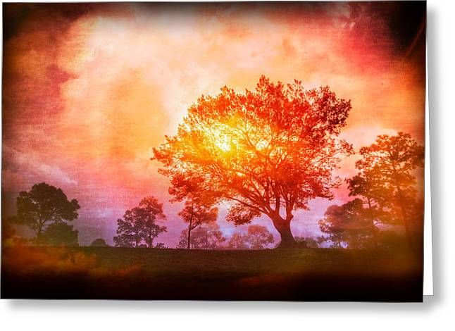 Fire In The Trees Greeting Card by Debra and Dave Vanderlaan