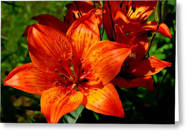 Fire Lilies Greeting Card by Marilynne Bull