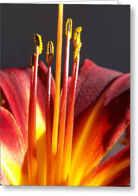 Fire Lily Greeting Card by Amy Fose