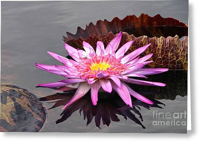 Fire Of The Pond Greeting Card by Byron Varvarigos