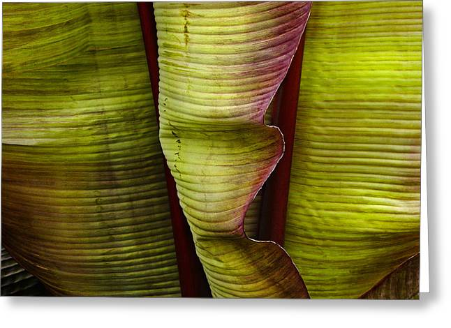 Fire Palm Iv Greeting Card