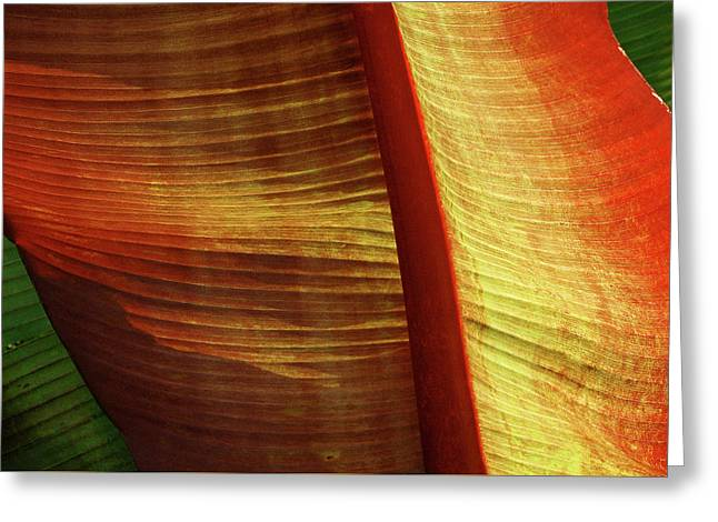 Fire Palm Greeting Card