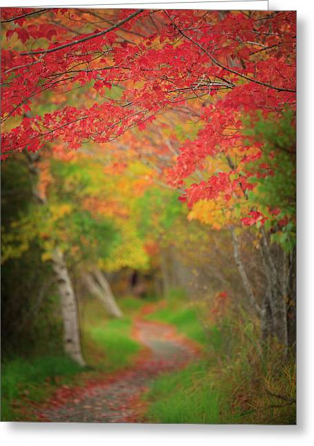 Greeting Card featuring the photograph Fire Red Path  by Emmanuel Panagiotakis