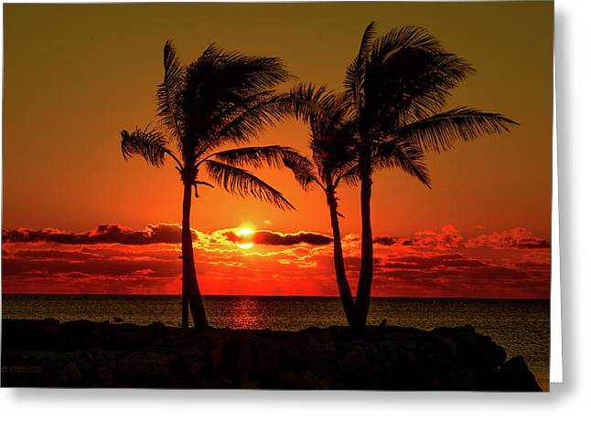 Fire Sunset Through Palms Greeting Card