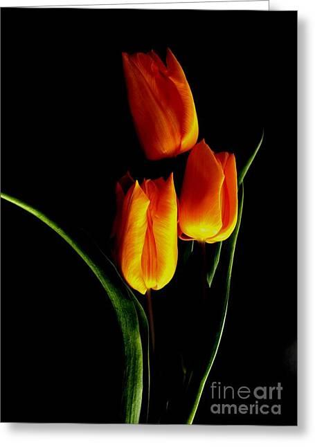 Fire Tulips Greeting Card by Valia Bradshaw