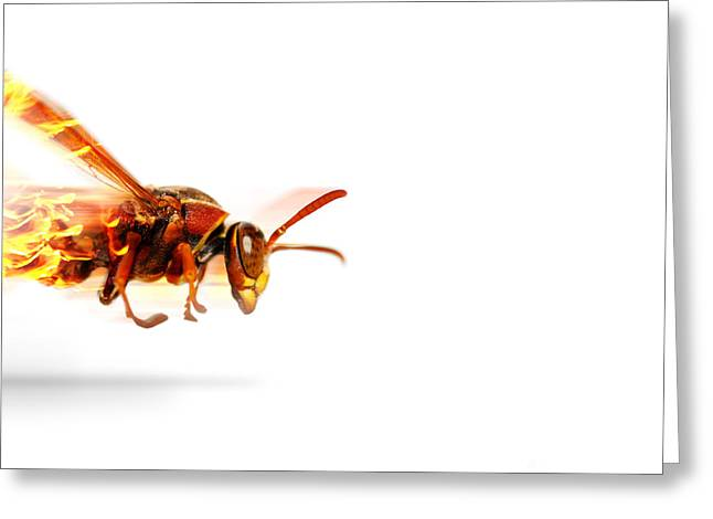 Fire Wasp Racing At Scorching Speed Greeting Card by Jorgo Photography - Wall Art Gallery