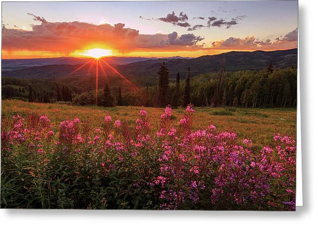 Fire Weed Wildflowers Near Buffalo Pass. Greeting Card
