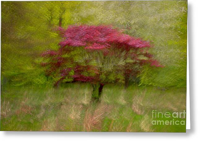 Fireball In Motion I Greeting Card by Richard Thomas