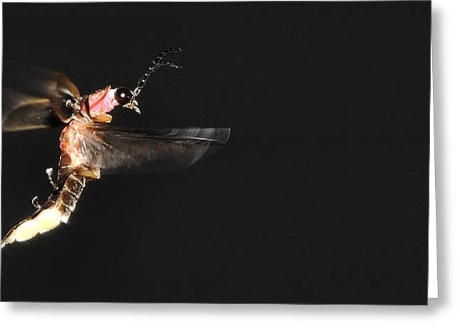 Firefly In Flight Greeting Card by Mark Fuller