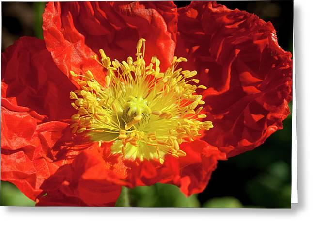 Firery Flower Greeting Card