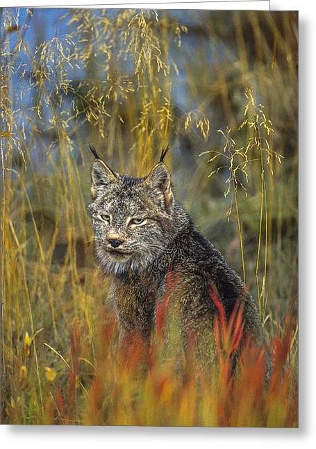 Fireweed Hunter Greeting Card