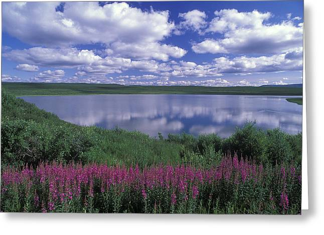 Fireweed, Lake And Clouds Reflecting Greeting Card