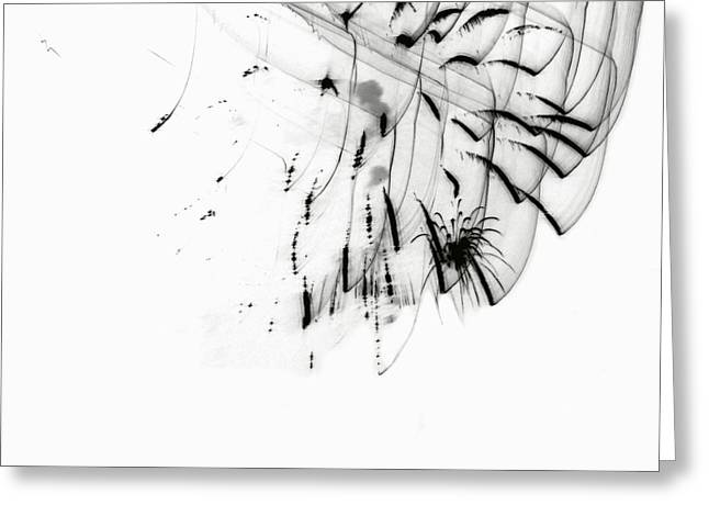 Firework Abstract 5 Greeting Card
