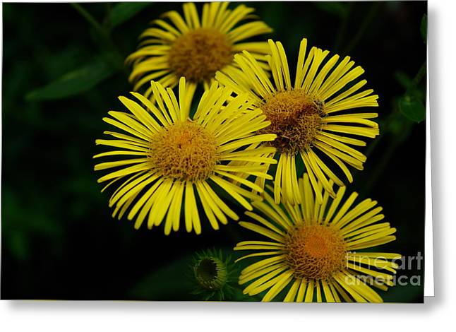 Fireworks In Yellow Greeting Card by John S