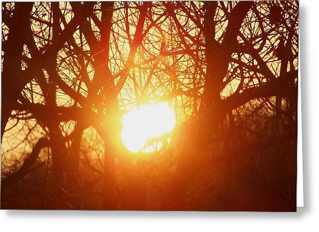 Firey December Sunset Greeting Card by Lila Mattison