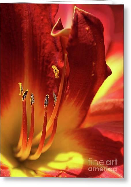 Firey Lily Greeting Card by Sabrina L Ryan