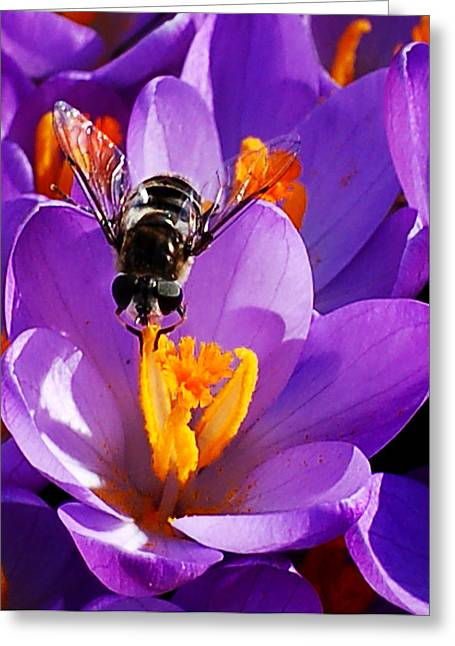 First Bee Of Spring Greeting Card