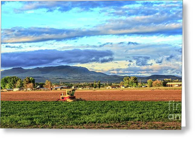 First Cutting Of Alfalfa Greeting Card by Robert Bales