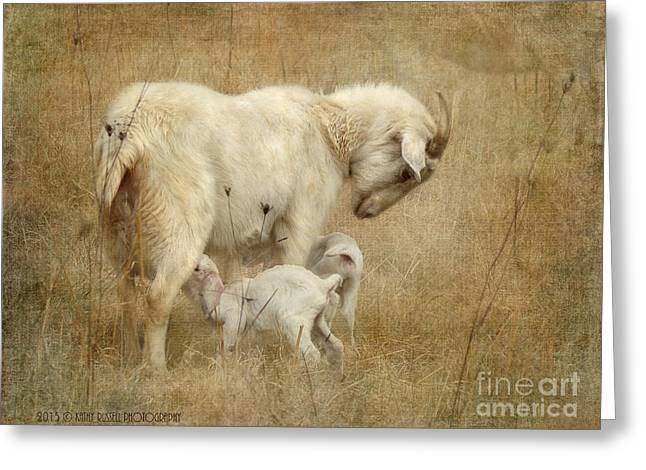 First Day Of Life Greeting Card by Kathy Russell