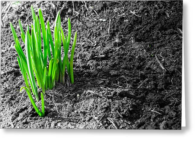 First Green Shoots Of Spring And Dirt Greeting Card