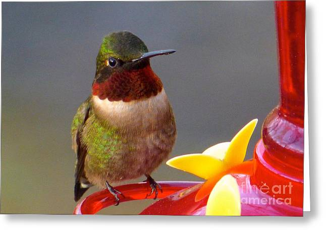 First Hummer Of 2015 Greeting Card