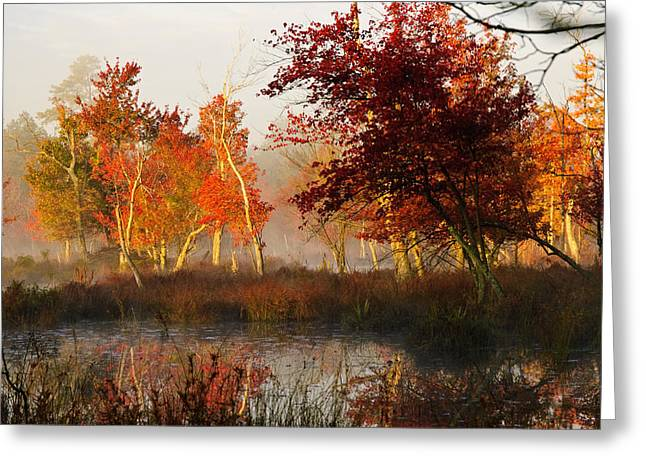 Greeting Card featuring the photograph First Light At The Pine Barrens by Louis Dallara