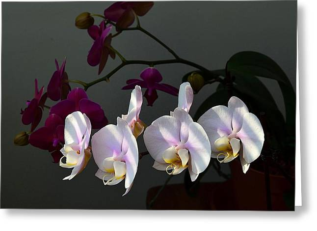 First Light Greeting Card by Kathy Eickenberg