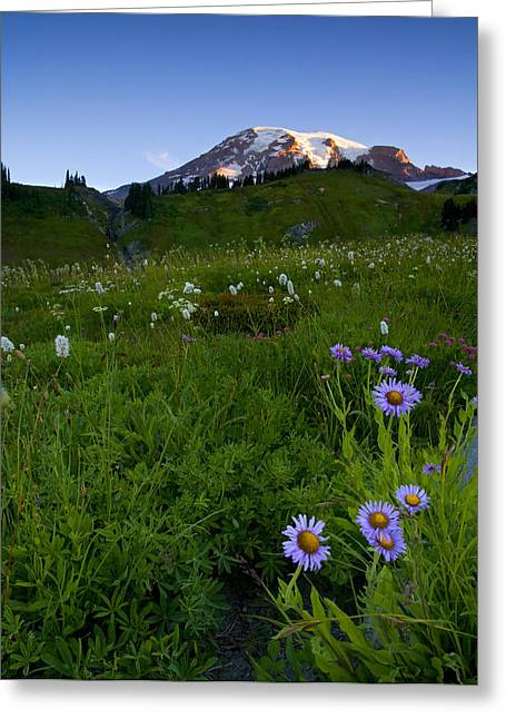 Aster Greeting Cards - First Light Greeting Card by Mike  Dawson