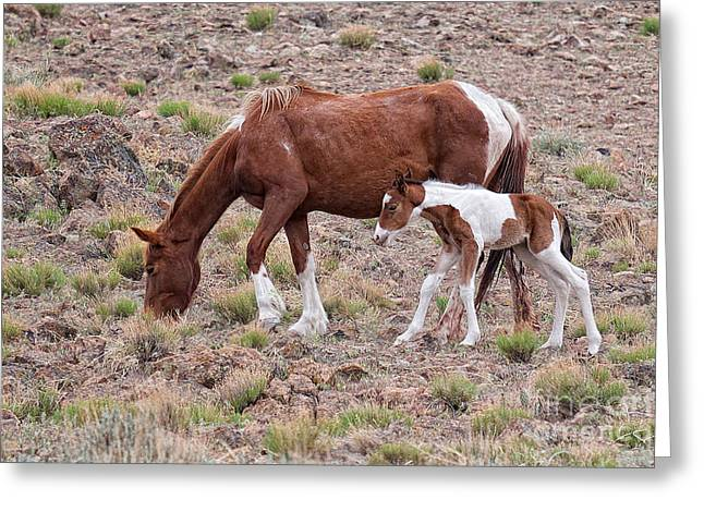 First Little Mustang Baby Paint - Class Of 2015 Greeting Card by Vinnie Oakes