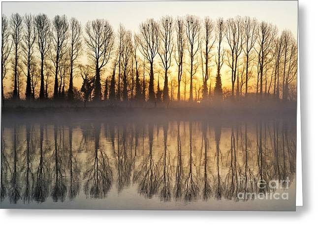First Misty Light Greeting Card by Tim Gainey