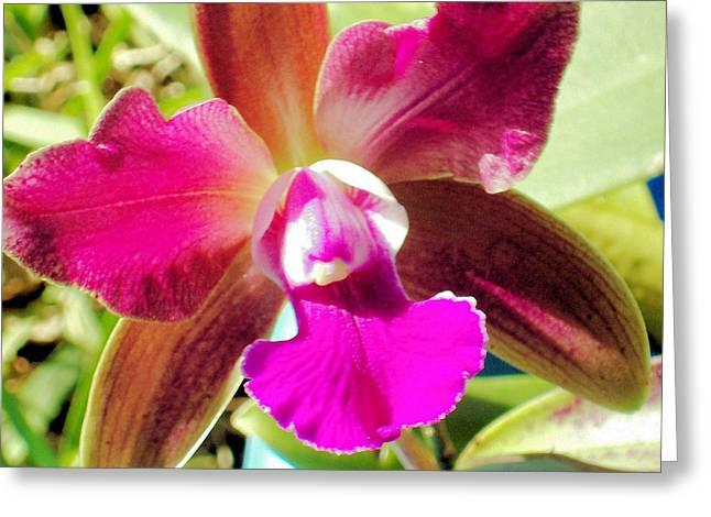 Beautiful Lavendar Orchid Greeting Card by Belinda Lee