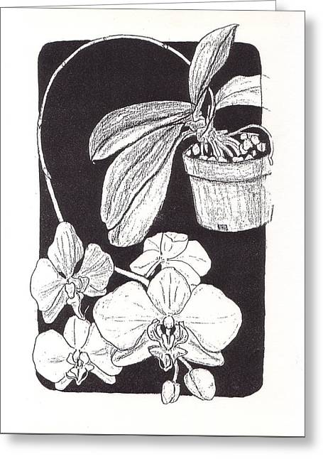 First Prize Moth Orchid Greeting Card by Vincent Mantia