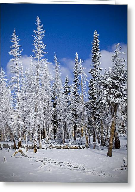 First Snow Greeting Card by Chris Brannen