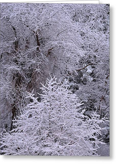 First Snow I Greeting Card