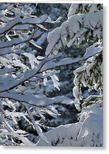 First Snow II Greeting Card