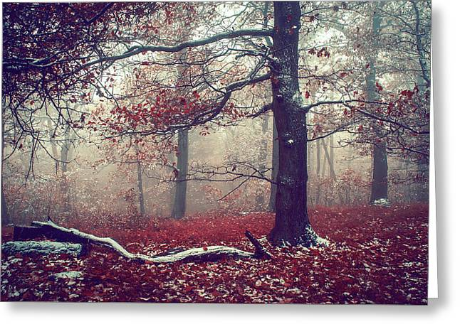 First Snow In Fall Woods Greeting Card by Jenny Rainbow