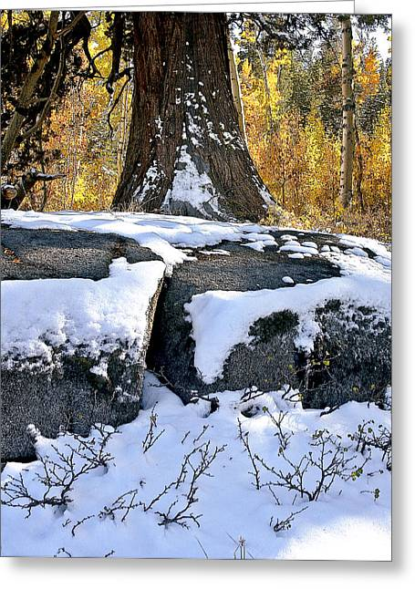 Greeting Card featuring the photograph First Snow by Larry Darnell