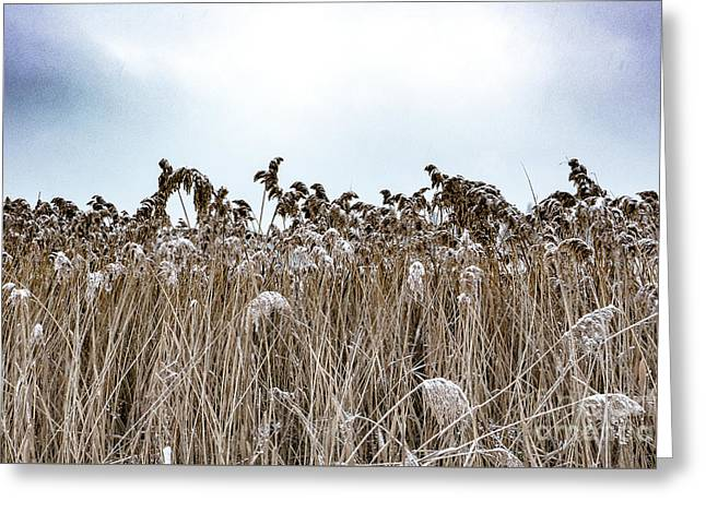First Snow On Roman Reed Greeting Card