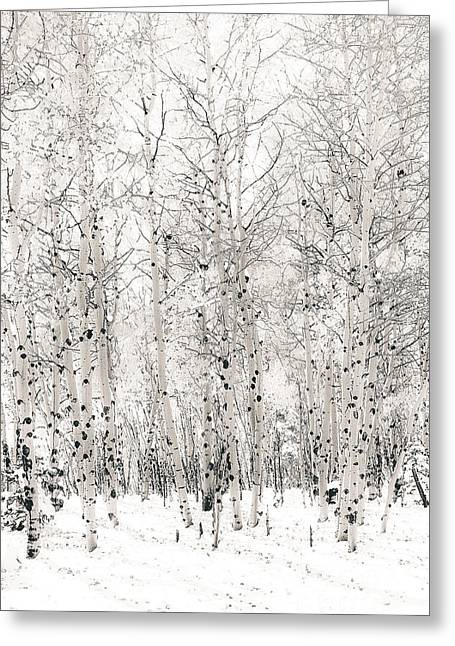 First Snow Greeting Card by The Forests Edge Photography - Diane Sandoval