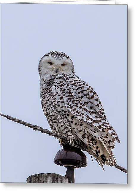 Greeting Card featuring the photograph First Snowy Owl by Paul Schultz