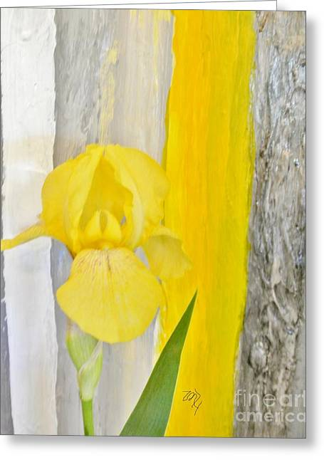 First Yellow Iris Greeting Card by Marsha Heiken
